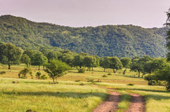 Grassland in ranthambhore Stock Photos