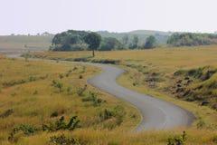 Grassland Royalty Free Stock Image