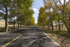 Grassland road. In late autumn, across the prairie road, roadside neat trees Stock Images