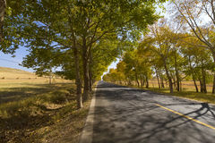 Grassland road. In late autumn, across the prairie road, roadside neat trees Royalty Free Stock Image