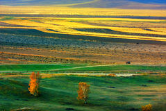 Grassland Road Royalty Free Stock Photography