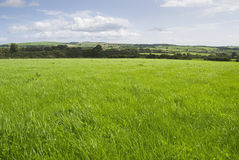 Grassland scenery Royalty Free Stock Photography