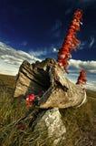 Grassland Scenery Stock Photography