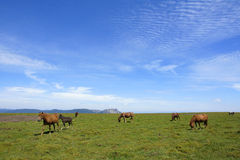 Grassland scenery Royalty Free Stock Images