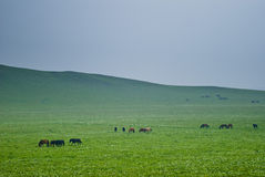 The grassland scenery Stock Photo