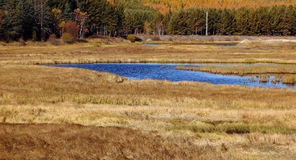 The grassland scenery in autumn Royalty Free Stock Photography