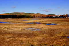 The grassland scenery in autumn Stock Photography