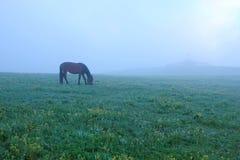 Grassland scenery Stock Image