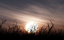 Grassland Setting Sun Royalty Free Stock Images