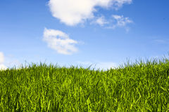 Grassland and sky. Royalty Free Stock Photo