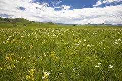 grassland  and  sky Stock Image