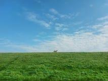 Grassland, Sky, Ecosystem, Prairie stock image