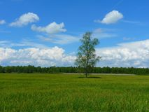 Grassland, Sky, Field, Cloud Royalty Free Stock Photos