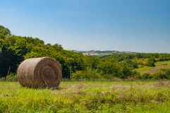 Grassland, Sky, Field, Pasture stock image