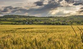 Grassland, Sky, Field, Prairie stock photos