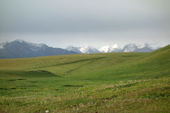 Grassland with snow mountains Royalty Free Stock Image