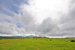 Grassland with snow mountains Royalty Free Stock Images