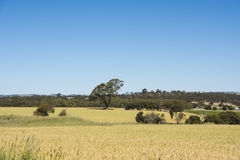 Grassland Southern Australia, Barossa Valley royalty free stock photos