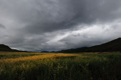 Grassland before a storm Stock Images