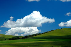 Grassland Summer. Scenic grassland in summer with clouds in the sky Stock Images
