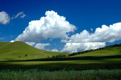Grassland Summer. Scenic grassland in summer with clouds in the sky Stock Photo