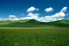 Grassland Summer. Scenic grassland in summer with clouds in the sky Royalty Free Stock Image
