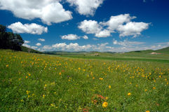 Grassland Summer. Scenic grassland in summer with clouds in the sky Royalty Free Stock Photo