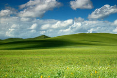 Grassland Summer. Scenic grassland in summer with clouds in the sky Royalty Free Stock Images