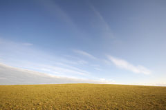 Grassland in summer Royalty Free Stock Photography