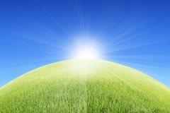 Grassland in  sunny day Royalty Free Stock Images