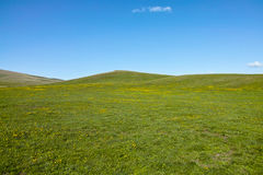 Grassland in a sunny day. Xinjiang of China Stock Photos