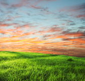 Grassland on sunset Royalty Free Stock Photo