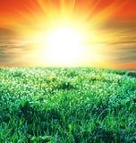 Grassland on sunset Royalty Free Stock Image