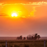 Grassland at sunset. Grassland is bathed in the golden sunset under the sun Stock Image