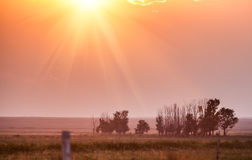 Grassland at sunset. Grassland is bathed in the golden sunset under the sun Royalty Free Stock Photos