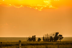 Grassland at sunset. Grassland is bathed in the golden sunset under the sun Royalty Free Stock Photography