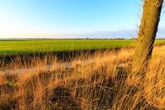 A grassland at sunset in a dutch landscape Stock Image