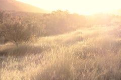 Grassland sunset Royalty Free Stock Photography