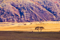 Grassland and trees Royalty Free Stock Photo