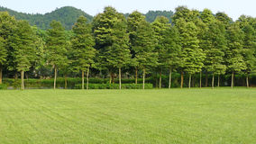 Grassland and trees Stock Photo