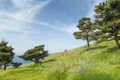 Grassland and trees on a slope Royalty Free Stock Photo