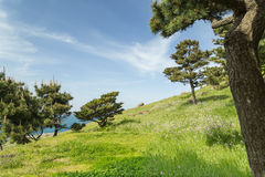 Grassland and trees on a slope Royalty Free Stock Photography