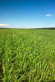 Grassland under bright blue sky Stock Photo