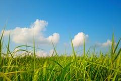 Grassland under sky Royalty Free Stock Images