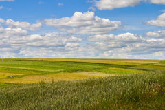 Grassland under sky Stock Photography