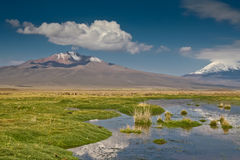 Grassland with volcanos. Grassy Bolivian wetland with Andean volcanoes behind Royalty Free Stock Image