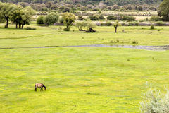Grassland in wetland Stock Images