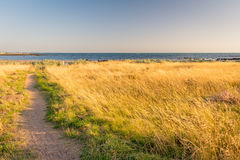 Grassland on Williamstown Seaside Stock Photography