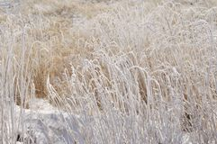 Grassland in winter Royalty Free Stock Photo