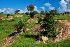 Free Grassland With Rocks Savanna. Tsavo West, Kenya, Africa Stock Photo - 29601500